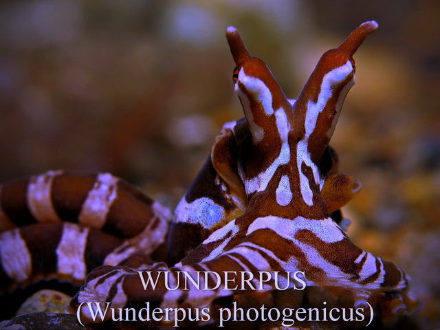 Anilao Diving, Underwater Photography|Dive Anilao/Batangas Philippines