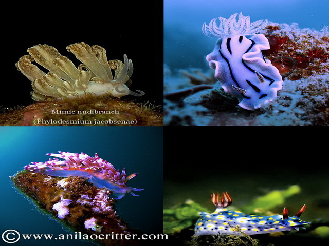 Scuba Dive in Anilao - Underwater Macro Photography, Anilao Muck dive