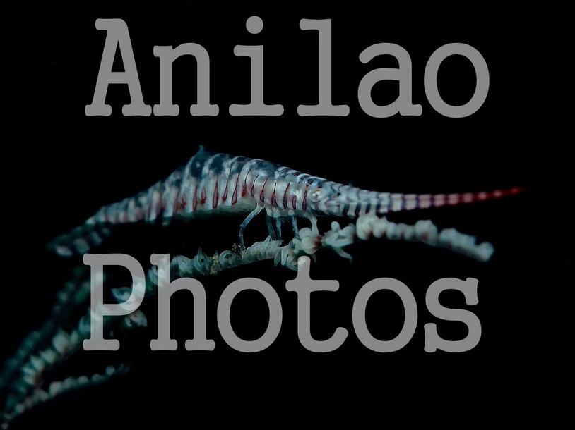 Divers and Critters - Anilao Diving Underwater Photography,Anilao Batangas.