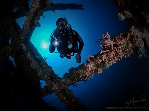 Divers and Critters - Anilao Diving Underwater Photography,Anilao Batangas